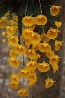 Orchids, Orchid, Dec, Thailand, Flower, Nature
