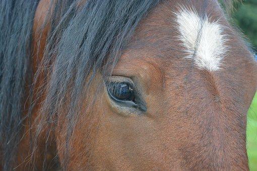 Horse, Eye, Horse Eye, Look, Animal, Nature, Head, Mane
