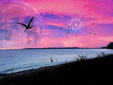 Ocean, Pink Sky, Silhouette, Sunset, Sunsets, Sky, Sea