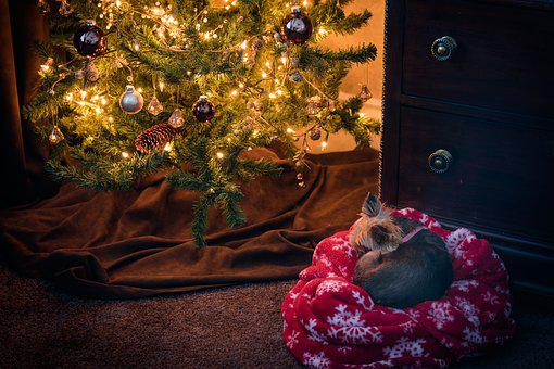 Christmas, Puppy, Dog, Small