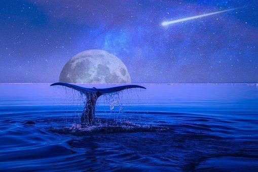 Moon, Stars, Shooting Star, Night, Sky, Space, Blue