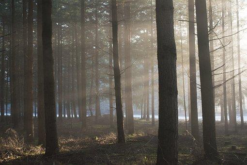 Sun, Shine, Bright, Nature, Forest, Winter, Outside