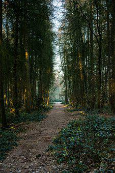 Forest, Woods, Path, Winter, Outside, Nature