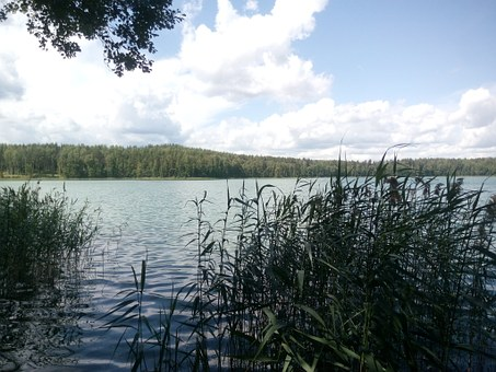 Clouds, Nature, Reeds, Lake, Blue Sky, Russia, Day