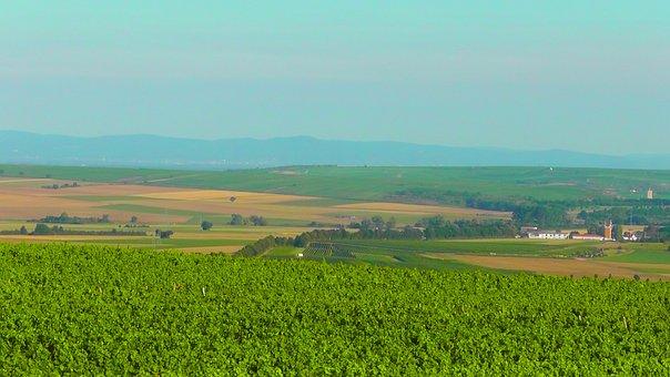 Rheinhessen, Landscape, Green, Nature, Vineyards