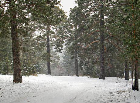 Nature, Winter, Landscape, Snow, Trees, Cold, Forest