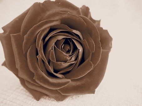 Retro, Rose, Rose Bloom, Blossom, Bloom, Flower