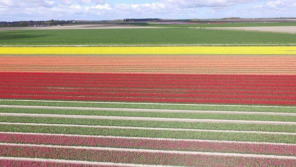 Flowers, Bulb, Nature, Spring, Bulbs, Bulb Netherlands
