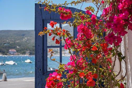 Detail, Flowers, Sea, Blue, Colors, Cadaqués