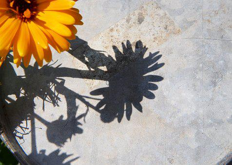 Marigold, Yellow Flower, Flower, Garden, Shadow, Sun
