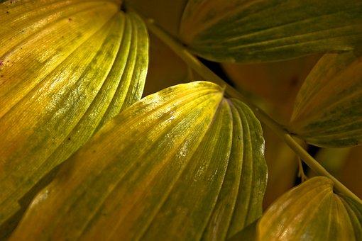 Leaf, Green, Closeup, Green Leaves, Green Leaf, Foliage