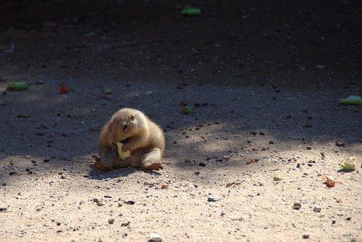 Chubby, Depression, Overweight, Depressed, Groundhog