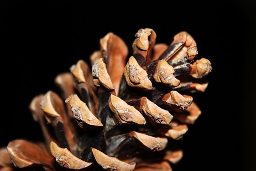 Tap, Christmas, Pine Cones, Christmas Time, Decoration