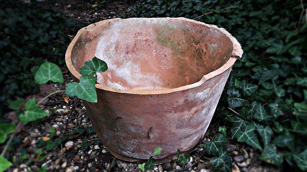 Bowl, Flower Pot, Shell, Pot, Pots, Garden