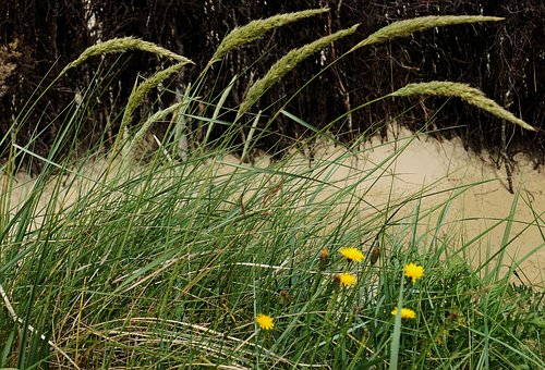 Dune, Dune Grass, Beach, Holiday, Sea, Water, Sand