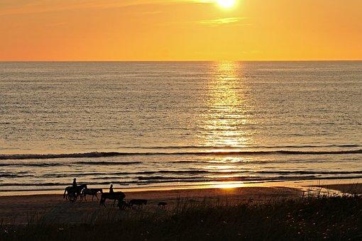 Beach, Sunset, Horses, Dogs, Coach, Impression, Sea