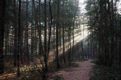 Forest, Woods, Nature, Sunshine, Sun Rays, Bright