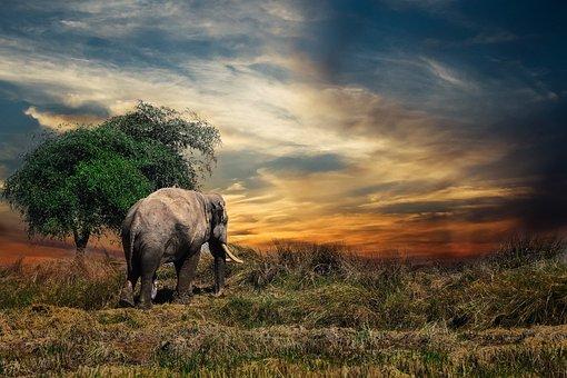 Elephant, The Himalayan, Tourism, Nature, Outdoor