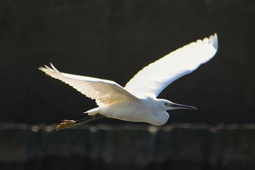 Animal, Sea, Breakwater, Waterside, Wild Birds, Egret