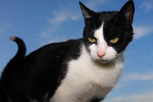 Cat, Cats, Animal, Animals, Pet, Black Cat, Kitten