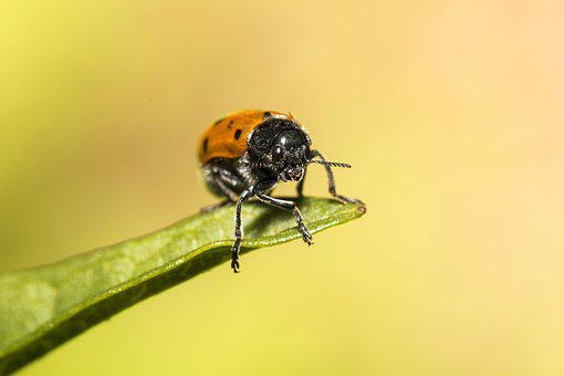 Ladybug, Nature, Colors, Macro, Insect