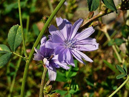 Flower, Plant, Meadow Flowers, Nature, Meadow