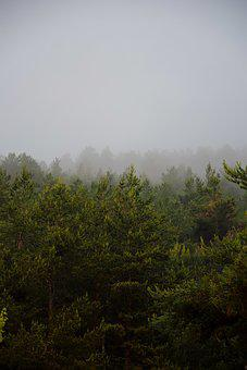 Mist, Fog, Pine, Mountain