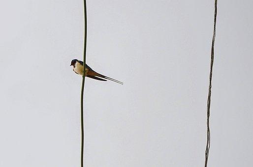 Bird, Sky, Fly, Freedom, Flying, Wildlife, Feather