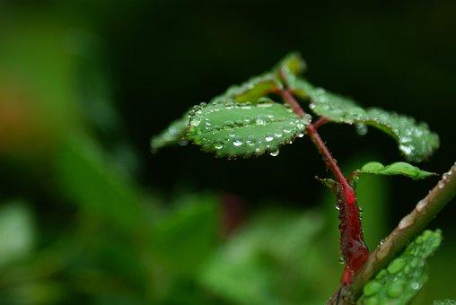 Macro, Wet, Leaf