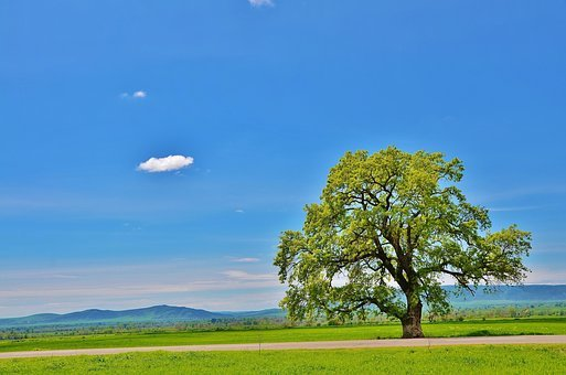 Tree, Mountain, Natur, Landscape, Green, Summer, Grass