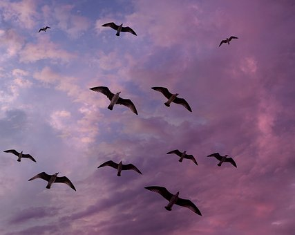 Seagulls, Sky, Flight, Cloud, Stol, Birds, Wings