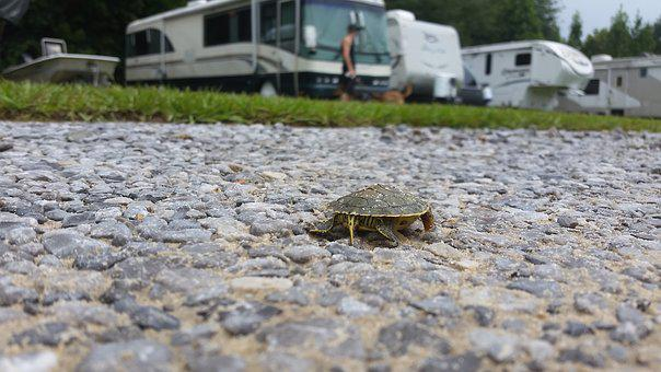 Turtle, Rocks, Baby, Nature, Shell, Reptile, Animal