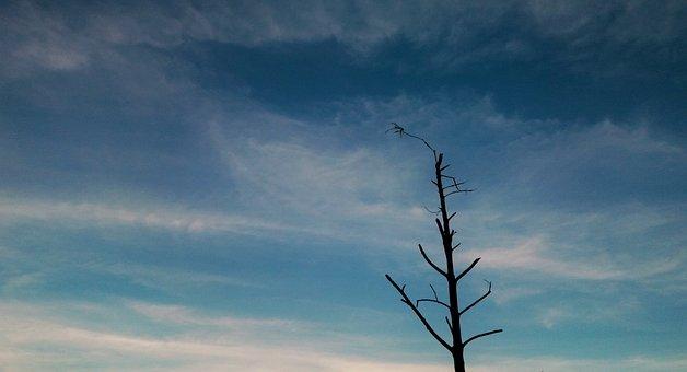 Sky, The Dry Tree, Autumn