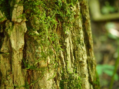 Tree, Moss, Tribe, Nature, Log, Autumn, Bark