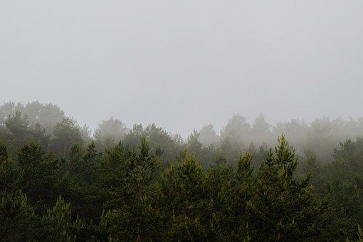 Mountain, Fog, Pine, Vistabella