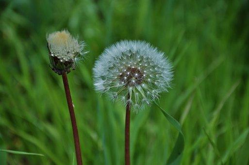 Milkweed, Flower, Wild, Summer, Flora, White, Macro