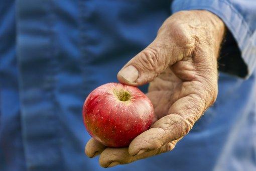 Harvest, Apple, Bauer, Autumn, Fruit, Nature, Red