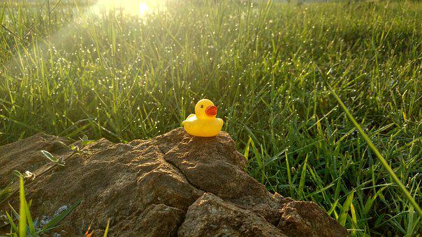 Duck Toy, Stone, Grass, Water Drops, Sun Light