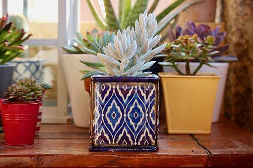 Fat Plants, Terracotta Pots, Ceramic Vases
