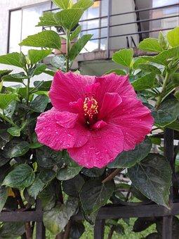 Plant, Rosa, Wild, Pink, Pink Flower, Garden, Beauty