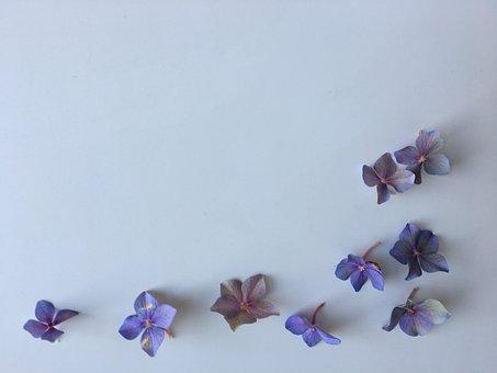 Hydrangea, Purple, Nature, Flower, Spring, Summer