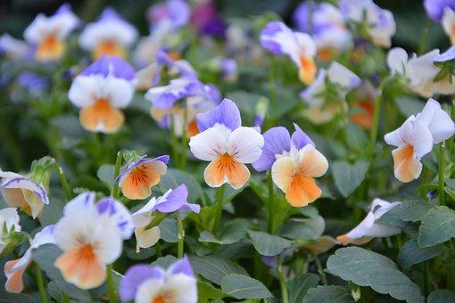 Flower Flowers, Massif, Garden, Nature, Parterre