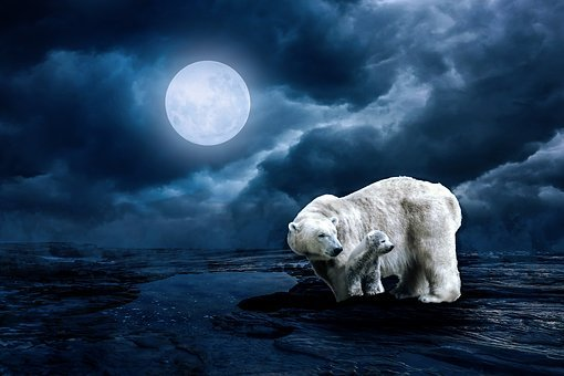 Polar Bear, Young Animal, Moon, Animal, Full Moon