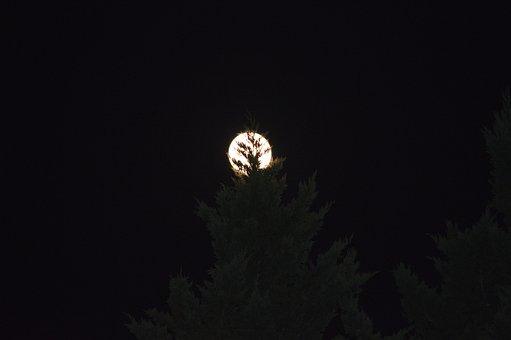Moon, Benson Nc, Dc Allen, Its My Journey, Night, Trees
