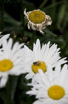 Flowers, Bee, Nature