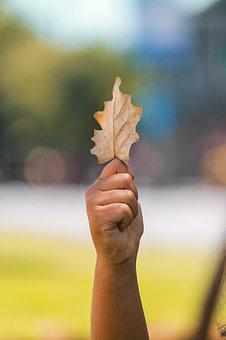 Leaf, Yellow, Autumn, Nature, Dry Leaf, Yellow Leaves