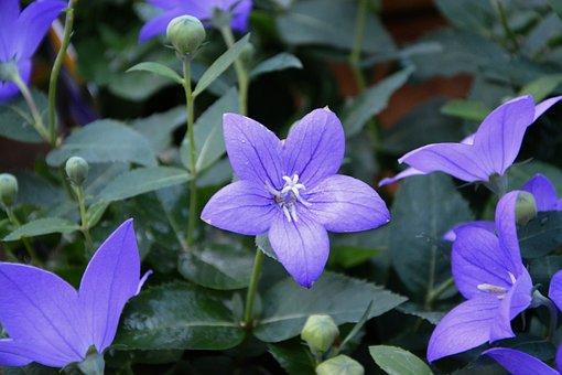 Flower, Purple Flowers, Green Leaves, Purple Flower