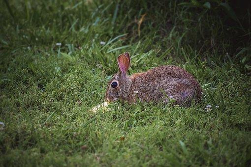 Bunny, Rabbit, Mammal, Animal, Easter, Spring, Cute