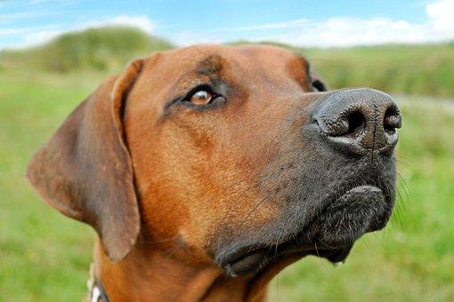 Dog, Nose, Snout, Head, Animal, Close, Dog's Nose