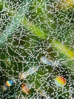 Cobweb, Drip, Dew, Dewdrop, Spectrum, Refraction